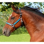 lightbluebase Turnout HALTER & LEAD made from BETA BIOTHANE (Any 2 COLOR COMBO)