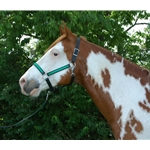 turquoise base Turnout HALTER & LEAD made from BETA BIOTHANE (Any 2 COLOR COMBO)
