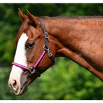 pink (hot/neon)  Quick Change HALTER BRIDLE with Snap On Browband made from BETA BIOTHANE (ANY 2 COLOR COMBO)