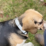 red DOG COLLAR made from REFLECTIVE DAY GLO BIOTHANE