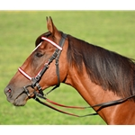 reddayglooverlay Traditional HALTER BRIDLE made with REFLECTIVE DAY GLO Biothane