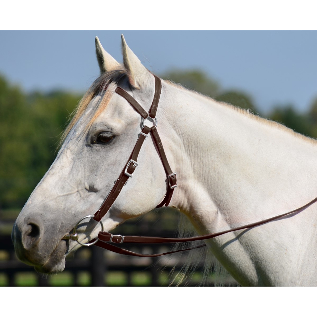 Australian Barcoo Outrider Aussie Bridle Made From Beta