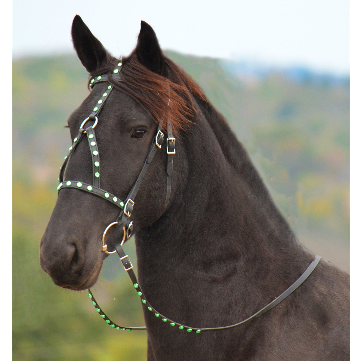 horse bridles and reins related keywords horse bridles
