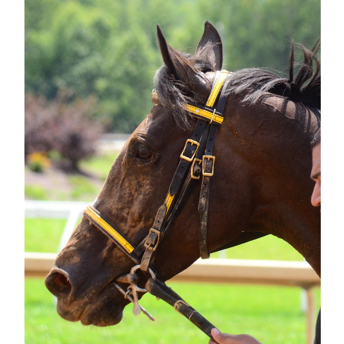 Racing Bridle Headstall Made From Beta Biothane Any 2