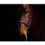 Turnout HALTER & LEAD made with REFLECTIVE Beta Biothane