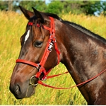 ***Kentucky Equine Humane Center (KyEHC) CHARITY LISTING** RED Traditional HALTER BRIDLE with BIT HANGERS made from BETA BIOTHANE