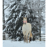 Two Horse Tack Gift Card