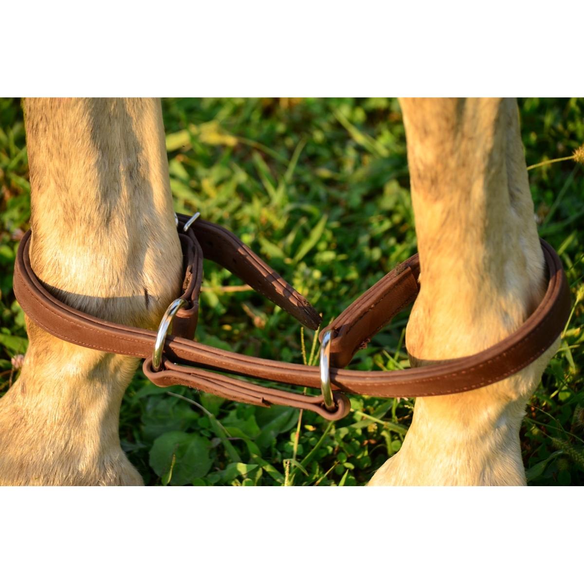 Horse Hobbles Made From Beta Biothane