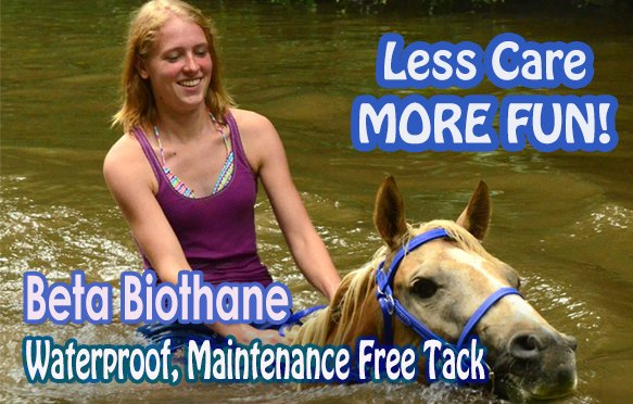 a swimming horse wears a waterproof and maintenance free beta Biothane tack
