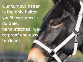 a horse wear a turnout halter