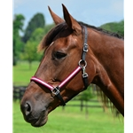 hotpinkoverlay Turnout HALTER & LEAD made with REFLECTIVE Beta Biothane