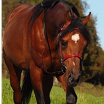 red (candy/bright)overlay  ENGLISH CONVERT-A-BRIDLE made from BETA BIOTHANE (ANY 2 COLOR COMBO)