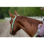 limegreen WESTERN BRIDLE (One Ear or Two Ear Split Ear Browband) made from BETA BIOTHANE (Solid Colored)