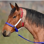 bluenoseband Buckle Nose Safety HALTER & LEAD made from BETA BIOTHANE (Mix N Match)