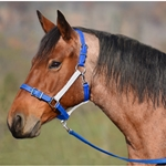 lightbluenoseband Buckle Nose Safety HALTER & LEAD made from BETA BIOTHANE (Mix N Match)
