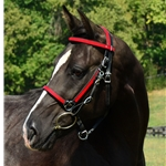 redoverlay Traditional HALTER BRIDLE with BIT HANGERS made from BETA BIOTHANE (ANY 2 COLOR COMBO)