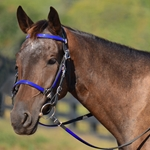 blue Traditional HALTER BRIDLE with BIT HANGERS made from BETA BIOTHANE (ANY 2 COLOR COMBO)
