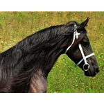 white ENGLISH CONVERT-A-BRIDLE made from BETA BIOTHANE (Solid Colored)
