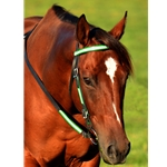 limegreendayglooverlay WESTERN BRIDLE (Full Browband) made with REFLECTIVE DAY GLO Biothane