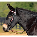 reddayglooverlay WESTERN BRIDLE (Full Browband) made with REFLECTIVE DAY GLO Biothane