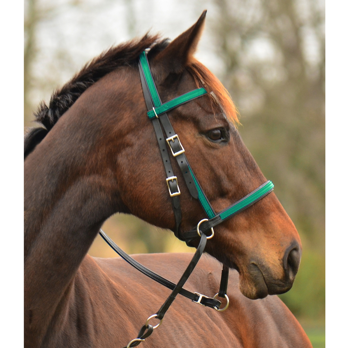 2 In 1 Bitless Bridle Made From Beta Biothane Any 2 Color