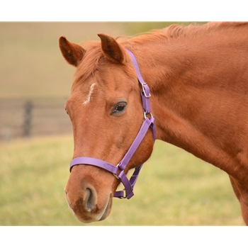 Buckle Nose Halter in Blue Beta Biothane (Small Pony Size)**Discount Tack**