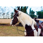 brown SIDEPULL Bitless Bridle made from BETA BIOTHANE (Solid Colored)
