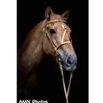 MEDIEVAL BAROQUE WAR or PARADE BRIDLE with reins Beta Biothane