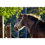 purple GROOMING HALTER & LEAD made from BETA BIOTHANE (Solid Colored)