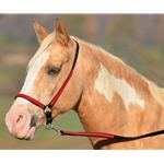 red overlay(candy/bright) GROOMING HALTER & LEAD made from BETA BIOTHANE (Any 2 COLOR COMBO)