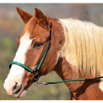 darkgreenoverlay(emerald/hunter) GROOMING HALTER & LEAD made from BETA BIOTHANE (Any 2 COLOR COMBO)