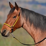 yellowoverlay(bright/canary) GROOMING HALTER & LEAD made from BETA BIOTHANE (Any 2 COLOR COMBO)