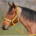 yellow Buckle Nose Safety HALTER & LEAD made from BETA BIOTHANE (Solid Colored)