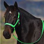 limegreen Buckle Nose Safety HALTER & LEAD made from BETA BIOTHANE (Solid Colored)