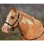 black Buckle Nose Safety HALTER & LEAD made from BETA BIOTHANE (Solid Colored)