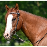 white Snap on Browband WESTERN BRIDLE made from BETA BIOTHANE (ANY 2 COLOR COMBO)