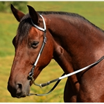 white WESTERN BRIDLE (One Ear or Two Ear Split Ear Browband) made from BETA BIOTHANE (ANY 2 COLOR COMBO)