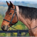 *SALE**  Traditional HALTER BRIDLE with BIT HANGERS made from BETA BIOTHANE (Solid Colored)