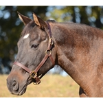 *LIFETIME GURANTEE* Turnout HALTER & LEAD made from BETA BIOTHANE (Solid Colored)