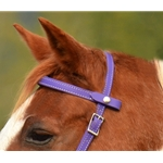 purple SNAP ON BROWBAND made from BETA BIOTHANE