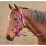 Quick Change HALTER BRIDLE with Snap on Browband made from NYLON