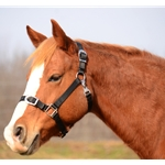 Buckle Nose Safety HALTER & LEAD made from NYLON