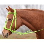 Bitless MEDIEVAL BAROQUE WAR or PARADE BRIDLE made from BETA BIOTHANE (Solid Colored)