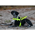 Dog Roading Harness made from beta biothane