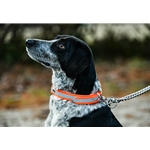 Hunt DOG COLLAR made from BETA BIOTHANE with REFLECTIVE DAY-GLO