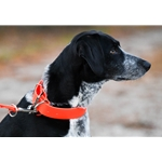 HUNT DOG COLLAR made from BETA BIOTHANE (Solid Colored)