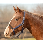 ROPE COMBO HALTER made from BETA BIOTHANE (Solid Colored)