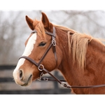 ****BETTER THAN  LEATHER ****2-in-1 Bitless Bridle made from BETA BIOTHANE