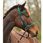 turqoise 2 in 1 BITLESS BRIDLE made from BETA BIOTHANE (Any 2 COLOR COMBO)