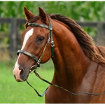 **FLASH SALE** CAMO Bridles made from BETA BIOTHANE